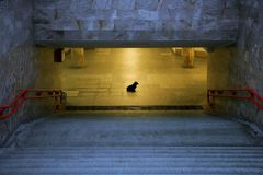 Loneliness. Dog waits for the host in the underpass Stock Photography