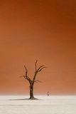 Loneliness. Early morning in Deadvlei, Namibia Stock Photography