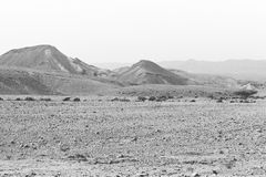 Loneliness and emptiness of the desert. Loneliness and emptiness of the rocky hills of the Negev Desert in Israel. Breathtaking landscape and nature of the royalty free stock photography