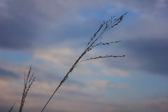 Loneliness. Flower grass with cloud blue sky feel lonely Stock Images