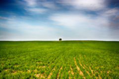 Loneliness landscape Royalty Free Stock Image