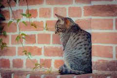 Loneliness. lonely cat stock photo