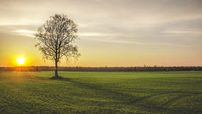 Loneliness. Lonely tree in field Royalty Free Stock Images