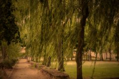 Loneliness park autumn, melancholic urban  landscape. Willow Stock Images