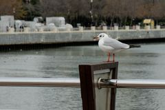 Standing seagull on the embankment on the background waterfront and trees royalty free stock photo