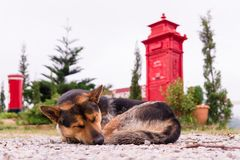 Loneliness and sadly , homeless abandoned stray rural dog sleepi. Ng lazy on rural hill Stock Photography