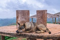 Loneliness and sadly , homeless abandoned stray rural dog sleepi. Ng lazy on rural hill stock images