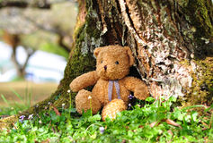 Loneliness Teddy Bear sitting in the garden.  Stock Photo