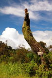 Loneliness tree Stock Photo