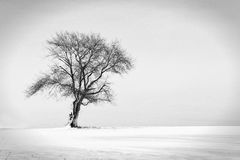 Loneliness. A tree in the middle of snow field Stock Image
