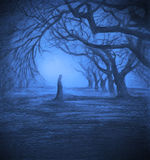 Loneliness in twilight forest Stock Images