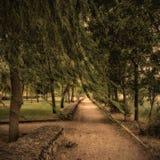 Melancholic landscape, loneliness park autumn. Loneliness willow in nobody park melancholic park autumn Stock Photography