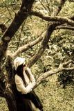 Loneliness women under the cherry tree. Loneliness woman under the cherry tree2 Royalty Free Stock Image