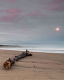 Loneliness. Wood resting on the beach Stock Photos