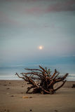 Loneliness. Wood resting on the beach Stock Image
