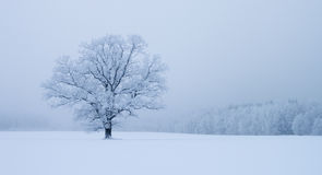 Lonely. Landscape image of lonely tree in snowdrift Royalty Free Stock Photo