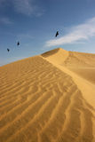 Lonely. Birds flying over the sand dunes (Morocco Royalty Free Stock Photography