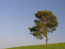 Lonely. A lonely jaw on a grassy hill Royalty Free Stock Image