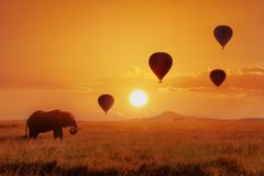 Lonely african elephant against the sky with balloons at sunset. African fantastic image. Africa, Tanzania, Serengeti National Pa royalty free stock photo