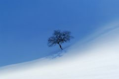 A lonely apple tree. In snowy landscape, half of filed is in shade the other half still lit by sun Royalty Free Stock Photography