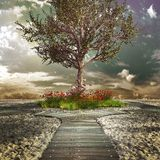Lonely apple tree Stock Images