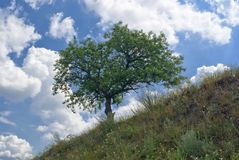 Lonely apricot tree on a hill Royalty Free Stock Image