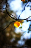 Lonely autumn leaf Royalty Free Stock Images