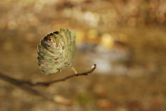 Lonely Autumn Leaf Royalty Free Stock Photography