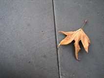 A lonely autumn leaf. An single autumn leaf on concrete pavement with space for some text royalty free stock photo