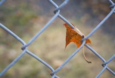 Lonely autumn leaf on the fence in October Royalty Free Stock Photo