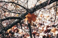 A lonely autumn leaf that is stuck on the eyelids. Autumn composition in orange tones. stock photography