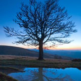 Lonely autumn naked tree on night mountain. Hill top in last sunset light (and its reflection in a puddle stock images