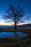 Lonely autumn naked tree on night mountain top Stock Photo