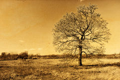 Lonely Autumn Oak Tree Retro Photo Royalty Free Stock Photography