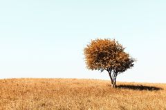 Lonely autumn tree Stock Photo