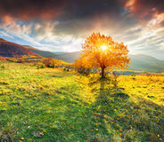 Lonely autumn tree against dramatic sky in mountains Royalty Free Stock Image
