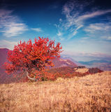 Lonely autumn tree against dramatic sky in mountains Royalty Free Stock Photography