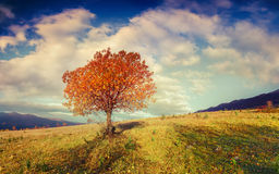Lonely autumn tree against sky Royalty Free Stock Photography