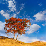 Lonely autumn tree Royalty Free Stock Photography