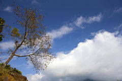 Lonely autumn tree in Himalayas Royalty Free Stock Image