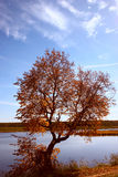 Lonely autumn tree on lake. Removed by a sunny day Stock Images