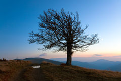 Lonely autumn tree on night mountain hill top. Lonely autumn naked tree on night mountain hill top in last sunset light Stock Photos