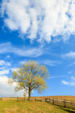 Lonely autumn tree on sky background. Stock Photo