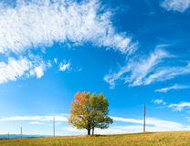 Lonely autumn tree on sky background Stock Photography