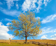 Lonely autumn tree on sky background. Stock Image