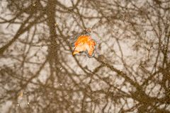 Lonely autumn yellow leaf,  bare trees are reflected royalty free stock photography