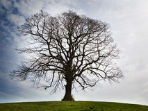 A lonely bare tree. On the hill stock photography