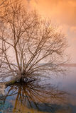 Lonely bare tree is above the water. Surface Stock Photos