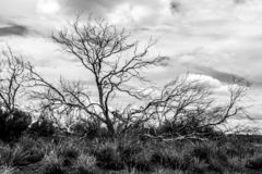 Lonely bare tree in Australia outback, Northern Territory stock photos