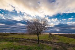 Lonely bare tree in farm field against cloudy sky Royalty Free Stock Photography